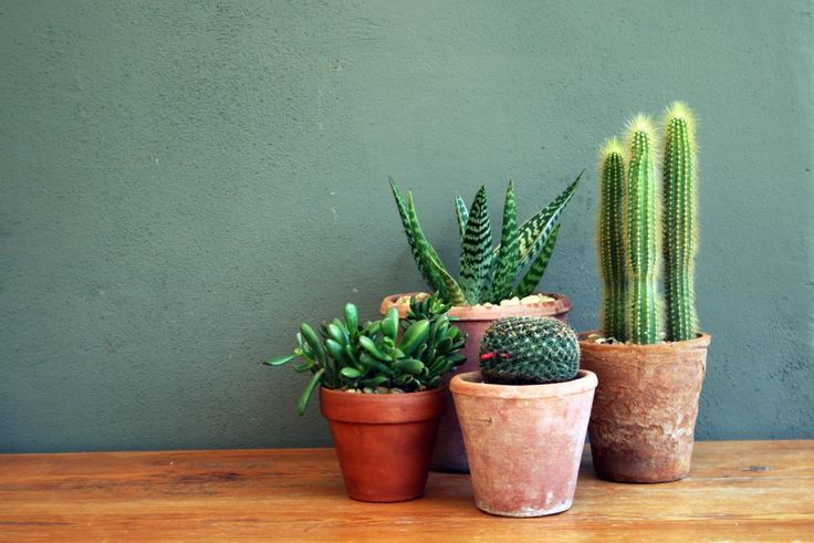 La succulente plante grasse mademoiselle claudine le blog - Plante grasse succulente ...