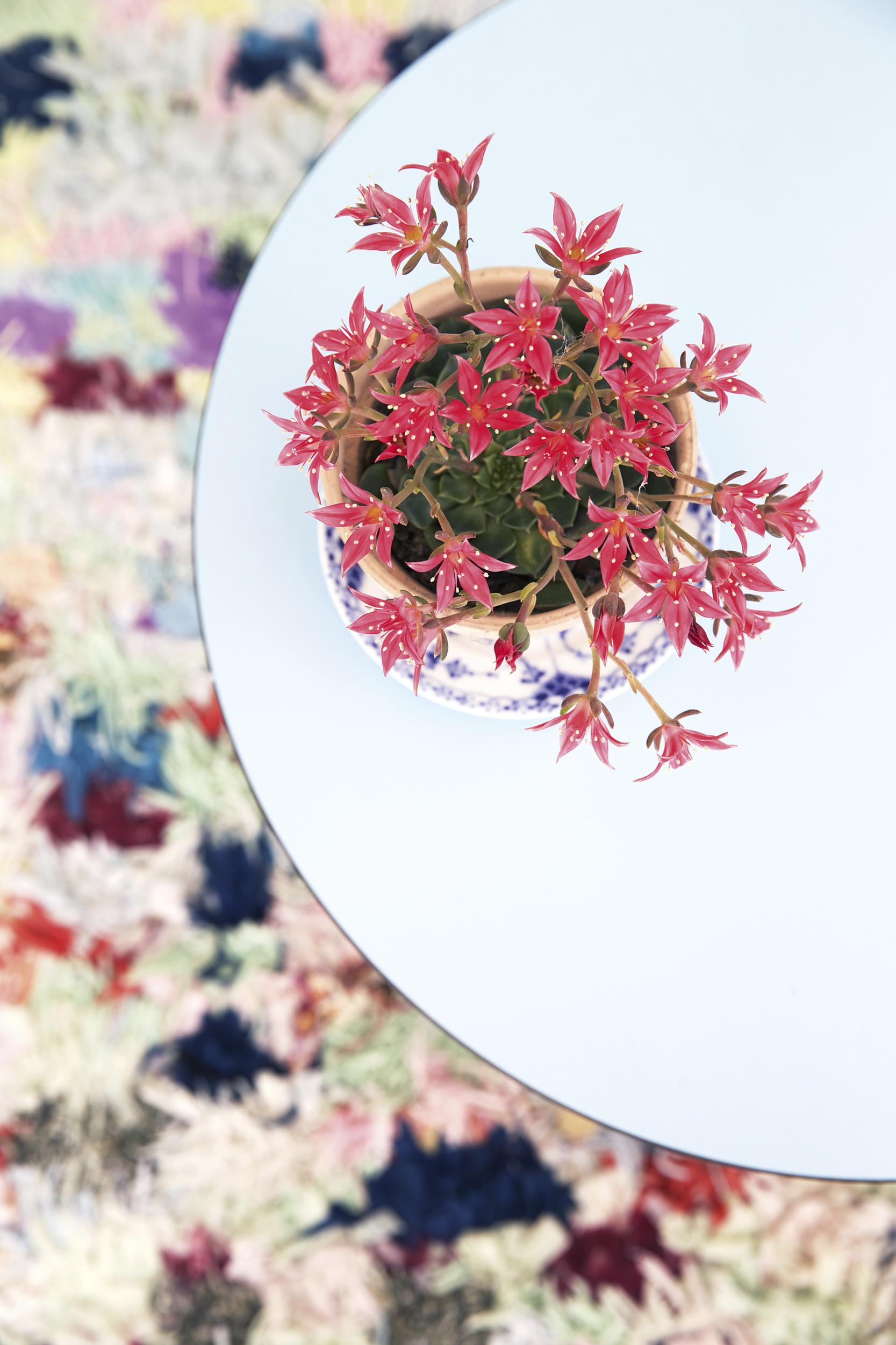 appartement-été-plante-tapis-coloré-mademoiselle-claudine