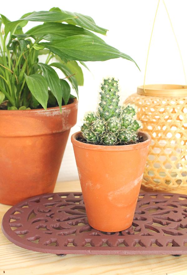 dessous-plat-fert-vintage-cactus-deco-mademoiselle-claudine