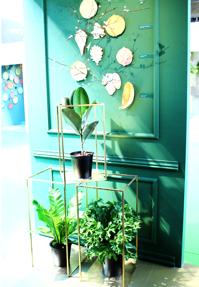surnature-m&o2015-plante-vert-mademoiselle-claudine