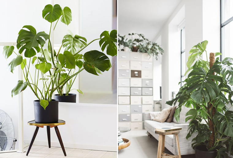 inspiraiton-decoration-bureau-plante-monstera-mademoiselle-claudine