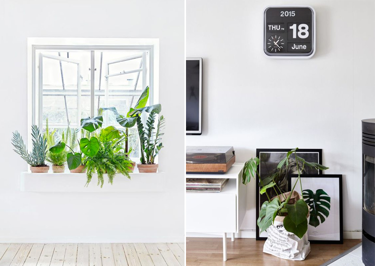 inspiration-decoration-bureau-plante-exotique-monstera-mademoiselle-claudine-