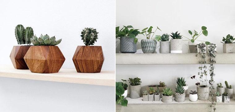cadeau-fête-des-pères-décoration-mademoiselle-claudine-plante-cactus