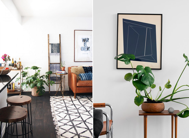 decoariont-plante-interieure-exotiue-monstera-mademoiselle-claudine