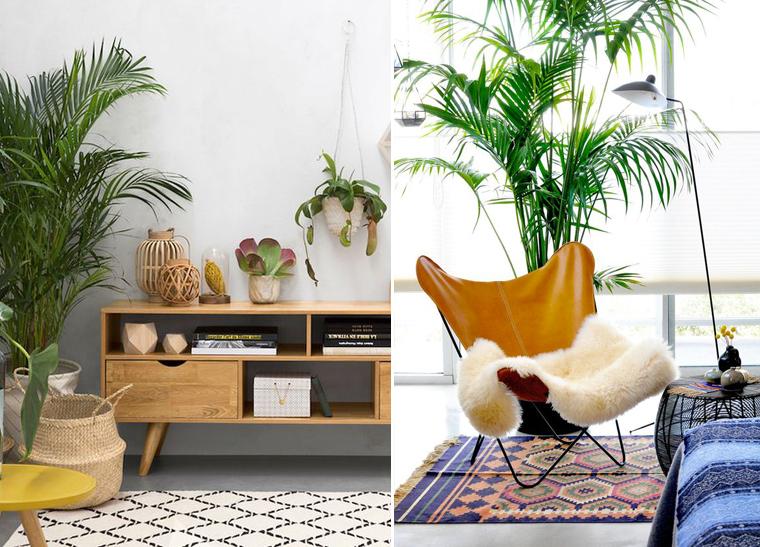 plante-interieure-exotique-areca-mademoiselle-claudine