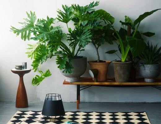 viuel-plante-exotique-decoration-interieure-mademoiselle-claudine