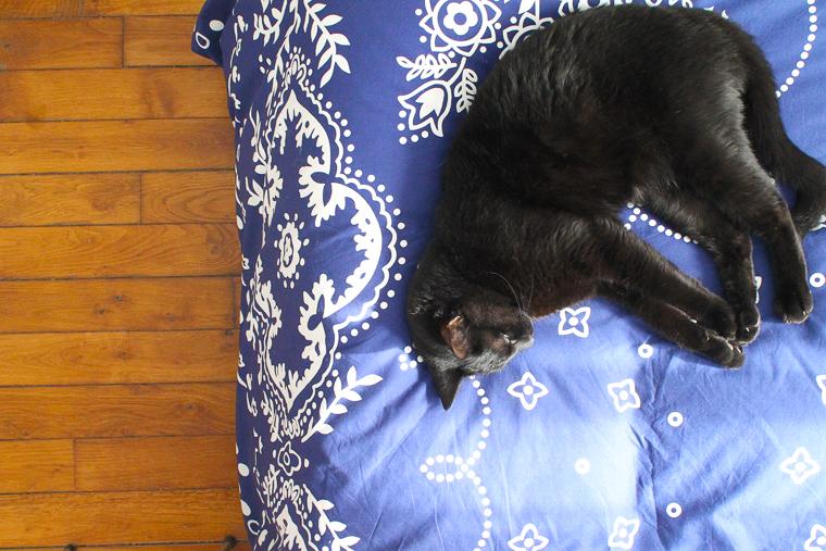 jeu-concours-essix-bensimon-mademoiselle-claudine-chat-noir-deco