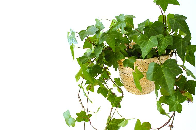 decoration-suspension-pour-plante-panier