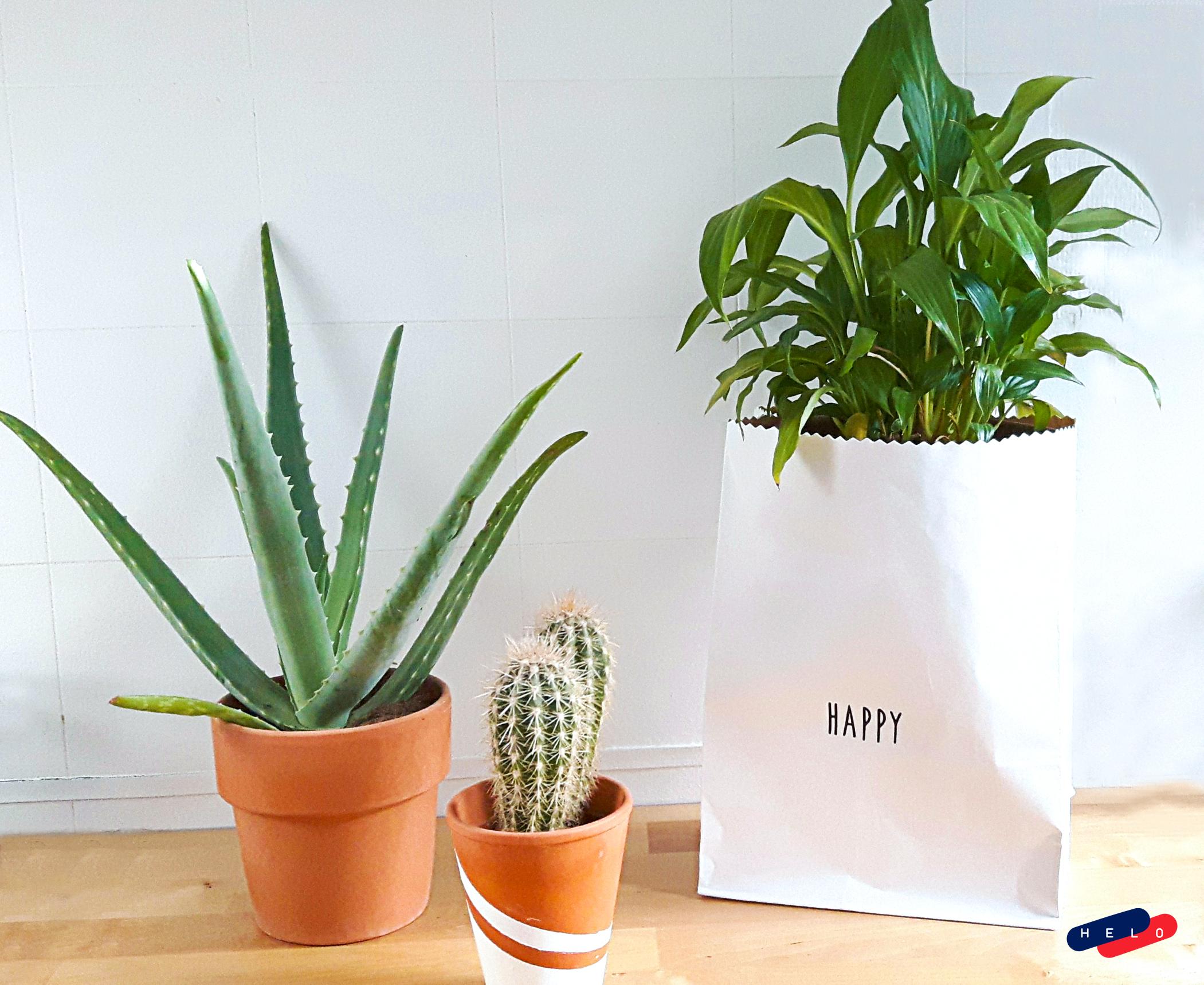 Les sac en papier Kraft Funambulus fabriqués dans le sud de la France.
