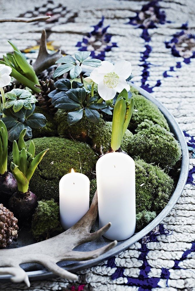 decoration-plante-noel-centre-de-table-hellebore-mademoisele-claudine