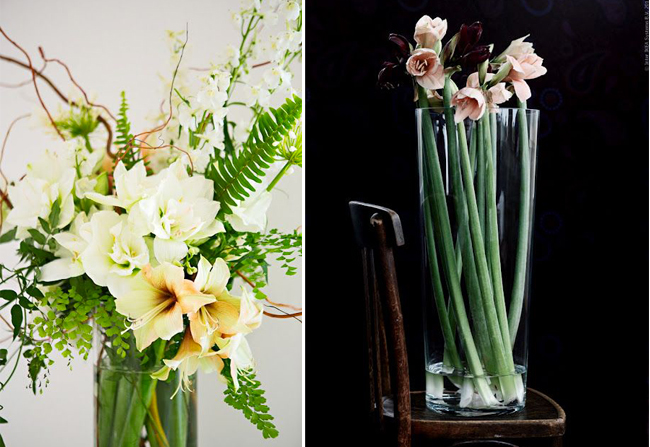 inspiration-decoration-noel-amaryllis-mademoiselle-claudine