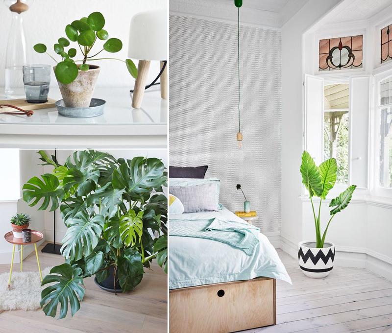 focus-couleur-vert-greenery-plante-verte-mademoiselle-claudine-