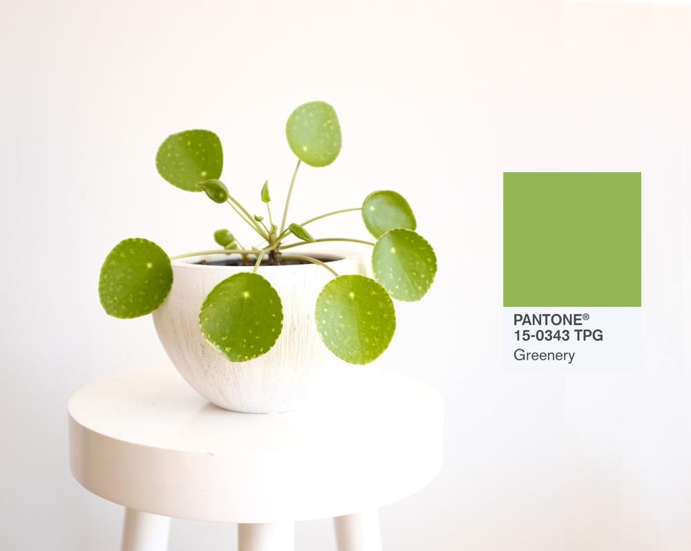 vignette-vert-greenery-ficus-couleur-mademoiselle-claudine