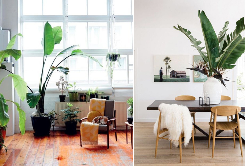inspiration-deco-oversize-plante-geante-mademoiselle-claudine