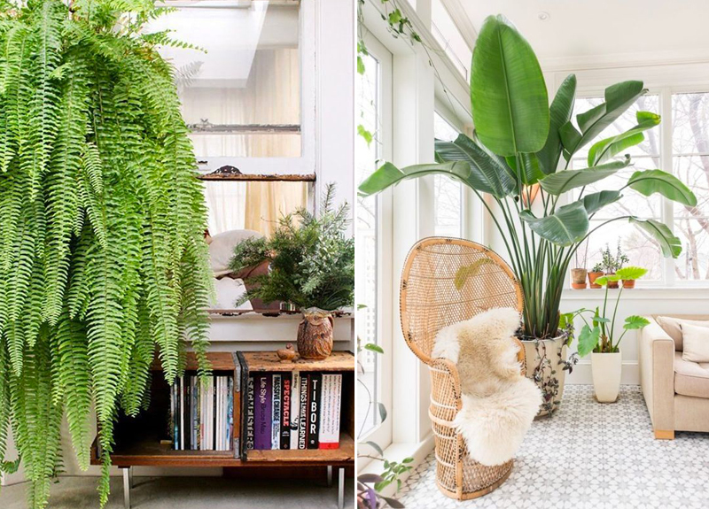 inspiration-decoration-oversize-plante-interieur-mademoiselle-claudine