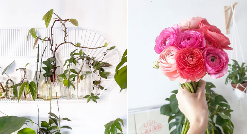 feel-good-decoration-plante-fleurs-madmeoiselle-claudine
