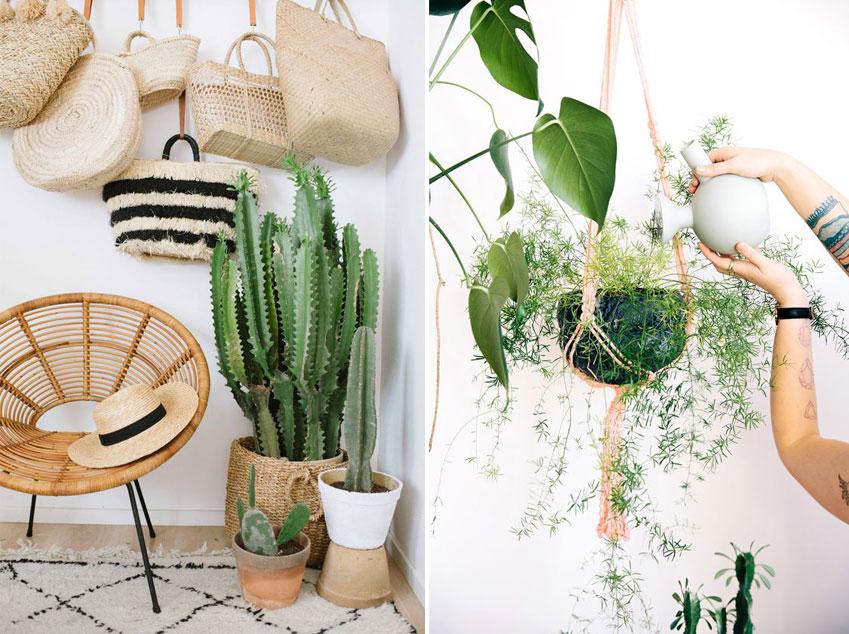 inspiration-decoration-boheme-plante-cactus-mademoiselel-claudine