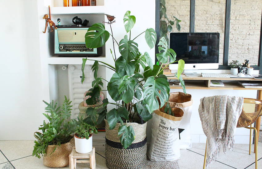 dcouvrir-desieng-interieur-plante-monstera-jungle-madmeoiselle-claudine