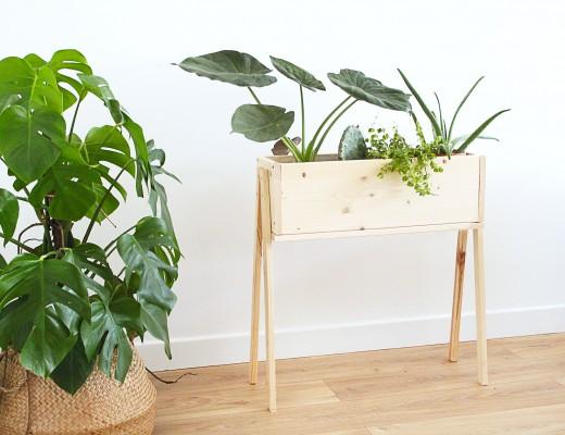 la succulente plante grasse mademoiselle claudine le blog. Black Bedroom Furniture Sets. Home Design Ideas