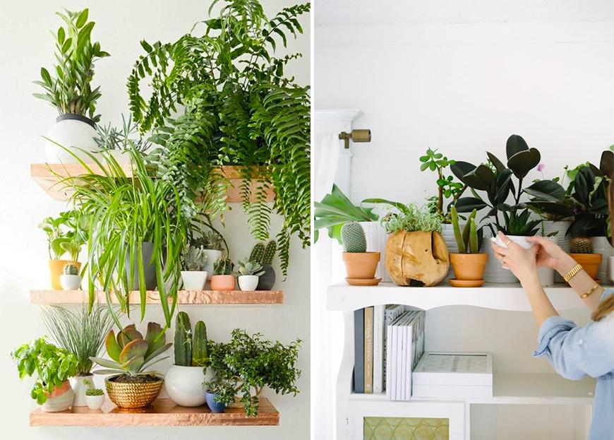 arrosage-plante-conseil-mademoiselle-claudine-