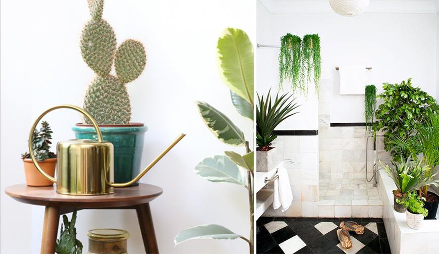 bien-arroses-plante-interieur-mademoiselle-claudine