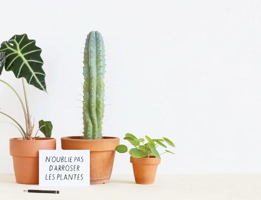 carte-arroser-les-plantes-mademoiselle-claudine