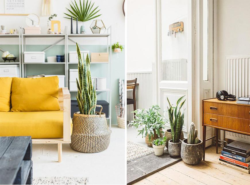 entretien-plantes-verte-madmeoiselle-claudine