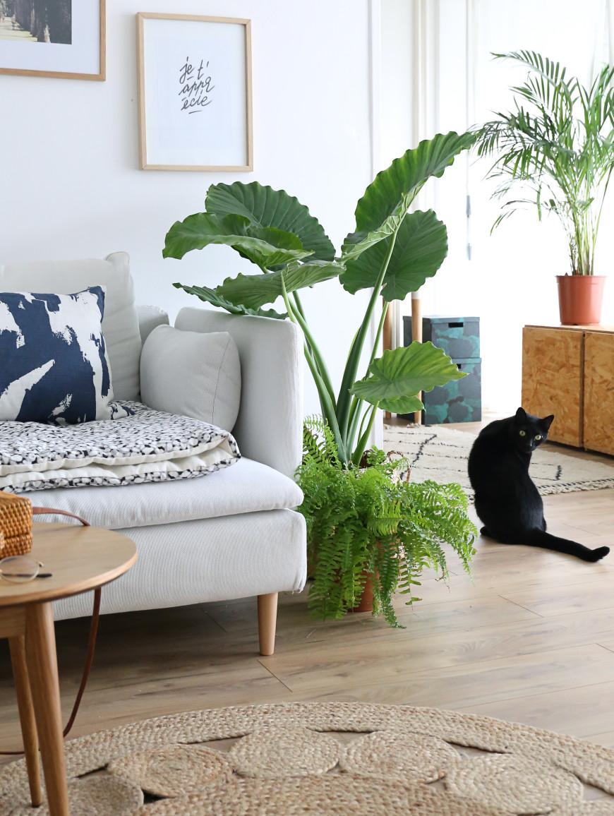 idee cadeau plante interieur mademoiselle claudine