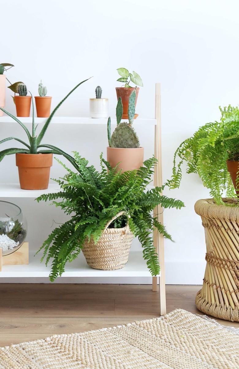 A-resultat-etageres-plantes