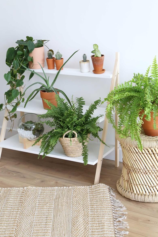 B-resultat-etageres-plantes