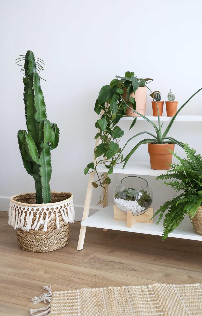 C-resultat-etageres-plantes
