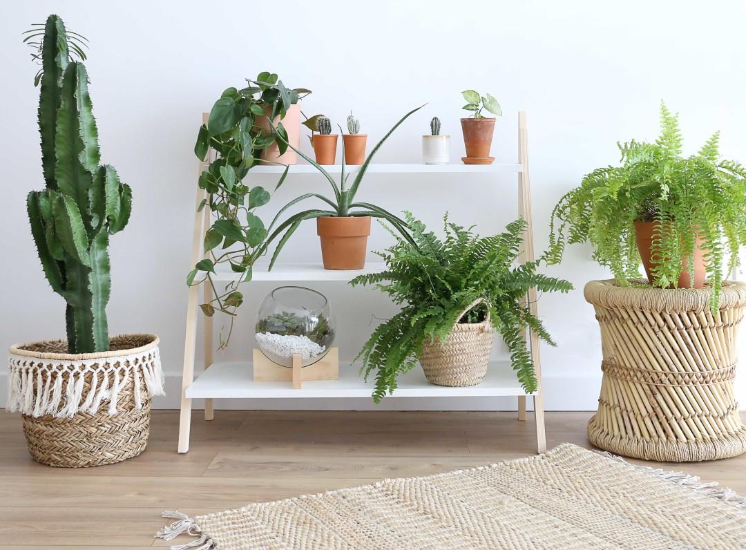 E-resultat-etageres-plantes