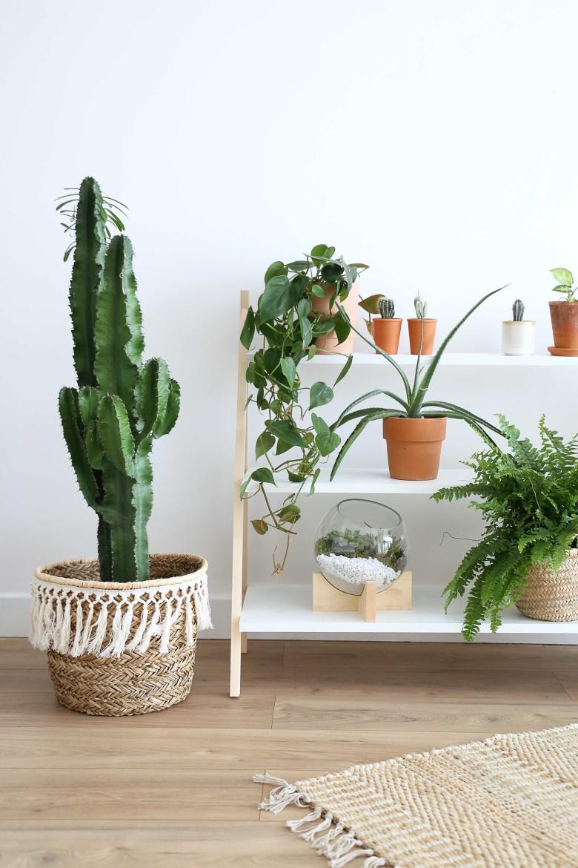 F-resultat-etageres-plantes