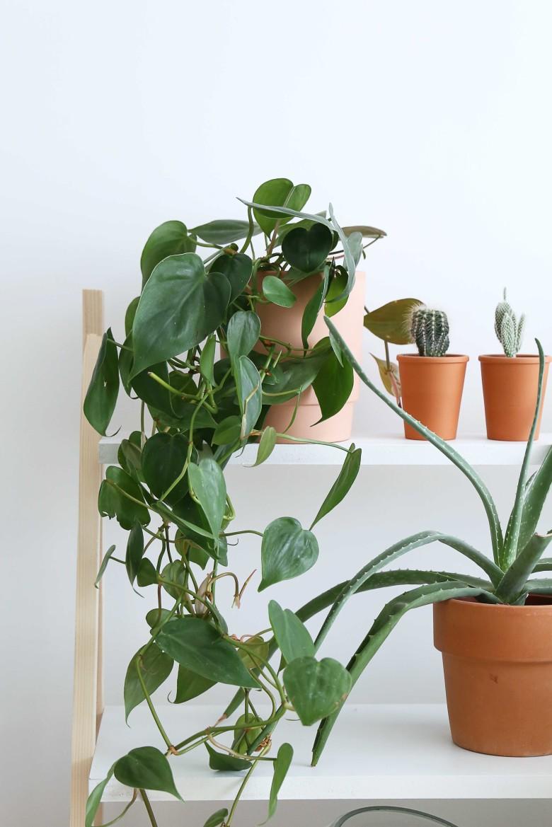 I-resultat-etageres-plantes-
