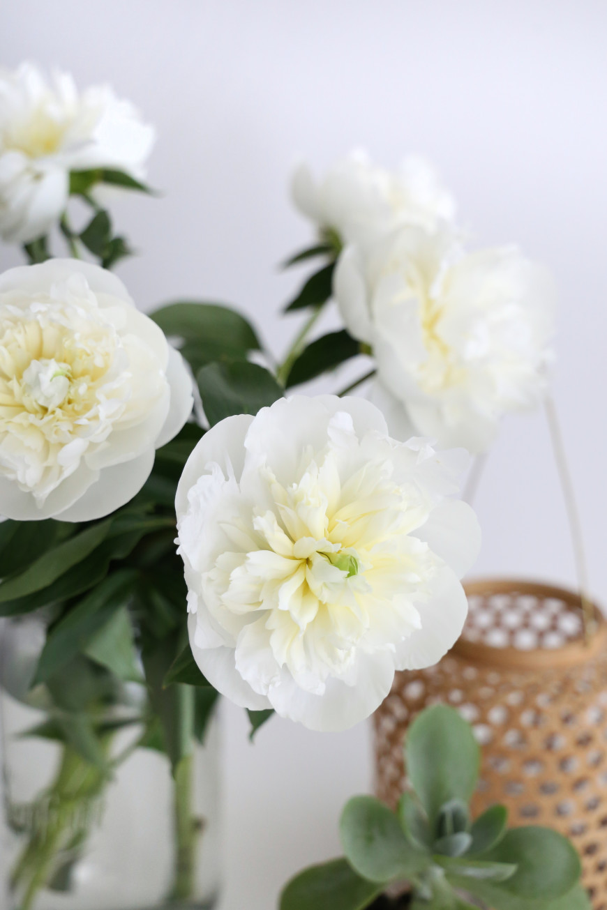 pivoine-blanche-mademoiselle-claudine-