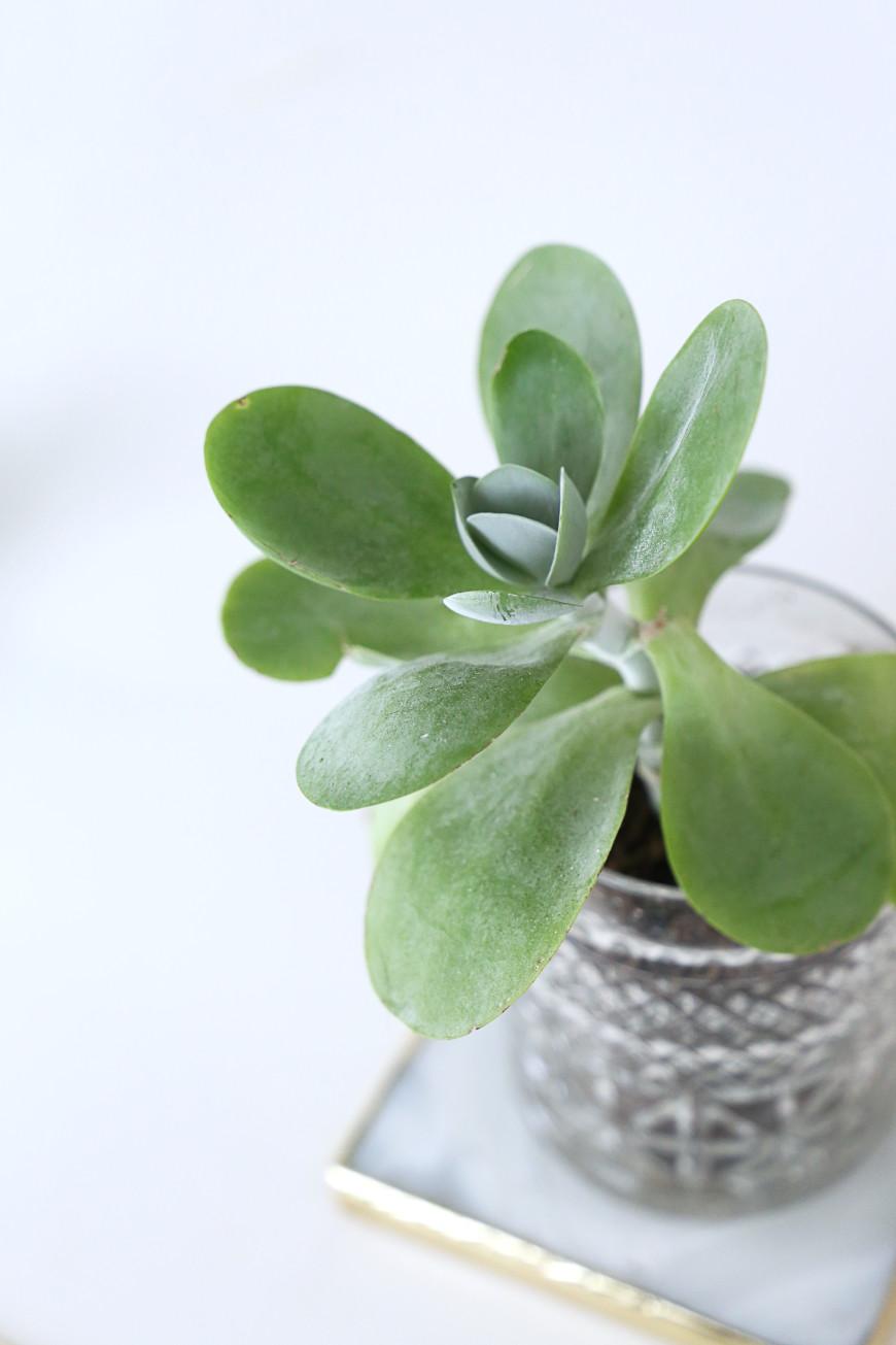 plante-chambre-ete-mademoiselle-claudine-
