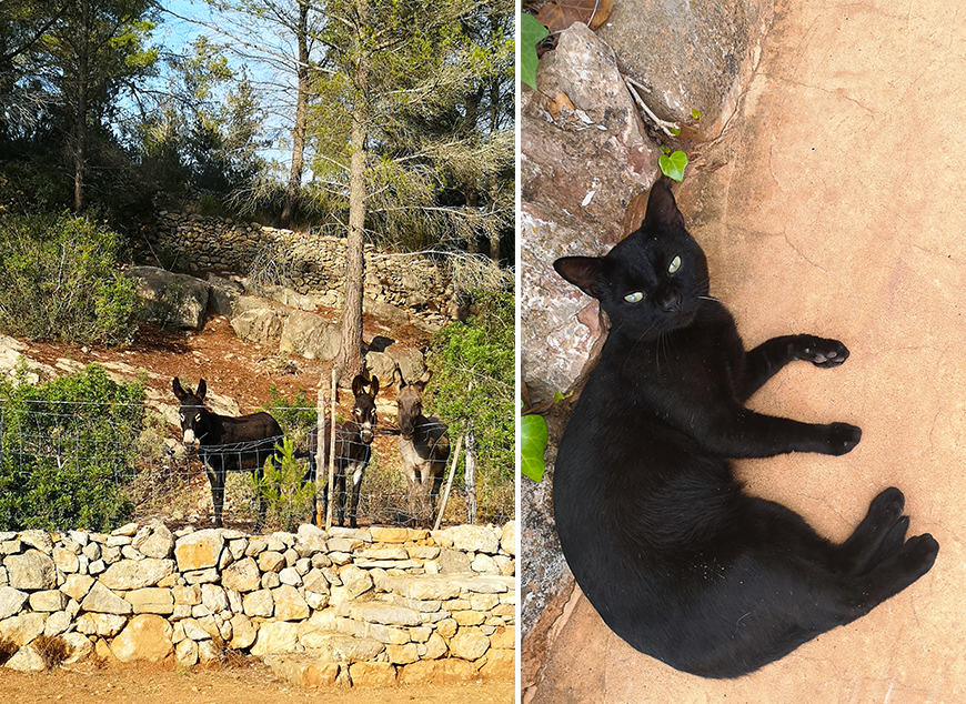 animaux-finca-can-marti-agroturisme-ibiza-mademoiselle-claudine-