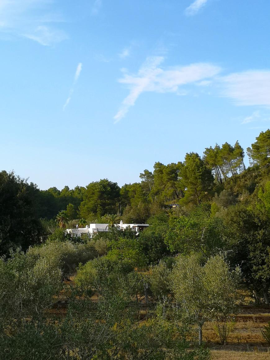 nature-ibiza-aroturisme-finca-can-marti-mademoiselle-claudine-